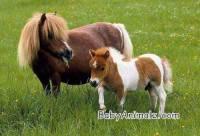 Nápověda:plemeno  velikosti většího psa (náhled)