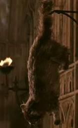 Jak je jmenuje Filchova kočka?