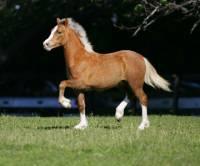 10) Poznej plemeno koně: (náhled)