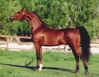 2) Poznej plemeno koně: (náhled)