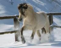 3) Poznej plemeno koně:  (náhled)