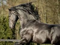 4) Poznej plemeno koně:  (náhled)