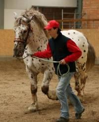 7) Poznej plemeno koně: (náhled)