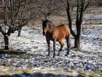 """Proč má kůň na obrázku """"odlehčenou"""" zadní nohu? (náhled)"""