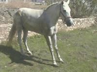 Proč kůň na obrázku stojí tak nezvykle? (náhled)