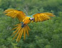 Jaký je to papoušek? (náhled)