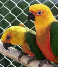 Jaký papoušek je na obrázku? (náhled)