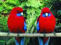 Jaký papoušek je na tomto obrázku? (náhled)