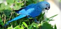 Jaký je to papoušek ? (náhled)