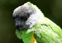 Který druh papouška je na obrázku? (náhled)