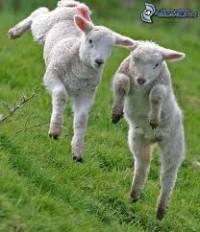 Jakou má ovečka barvu?