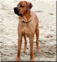 A co je tohle za psa?