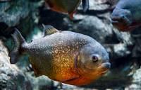 Obrázek č. 12 - jaka je to ryba ? (náhled)