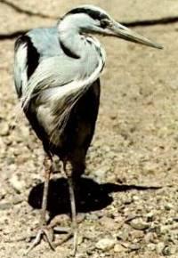 Obrázek č. 19 - jaký je to pták ? (náhled)