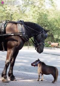 Jakého plemena jsou koně na obrázku? (náhled)