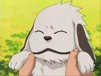 č.15-jak se jmenuje tento roztomilý psík a komu patří?? (náhled)