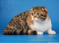 Jaké plemeno kočky je na fotce? (náhled)