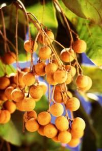 ...hm samí exotické ovoce... (náhled)