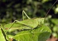 1.Co je na obrázku a do jakého řádu hmyzu to patří?