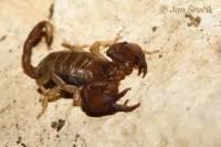 2.Co je na obrázku a do jakého řádu hmyzu to patří? (náhled)