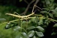 4.Co je na obrázku a do jaké skupiny hmyzu to patří? (náhled)