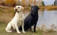 Nápověda pro otázku 5: Jak se jmenuje toto psí plemeno? (náhled)