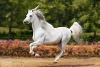 Jak se řekne kůň? (náhled)