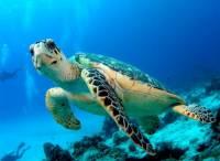 Jak se řekne želva? (náhled)