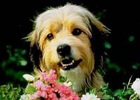 Jak se jmenuje psí hrdina na obrázku č.3? (náhled)