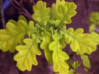 Strom na obrázku č.3 se jmenuje: (náhled)
