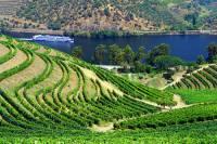 Vinice na obrázku č.9, ze kterých pochází proslulé portské víno, se nacházejí ve vinařské oblasti zapsané na seznamu UNESCO: (náhled)
