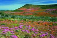 Na obrázku č.11 je jedno z nejbohatších území na výskyt rostlin na světě. Z tohoto důvodu bylo v r.2004 zapsáno na seznam UNESCO. Název území: (náhled)