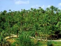 Na obrázku č.12 vidíte palmový háj v ELCHE, který byl pro svoji unikátnost zapsán na seznam UNESCO v r.2000. Ve kterém státě se palmový háj na obrázku č.12 nachází? (náhled)
