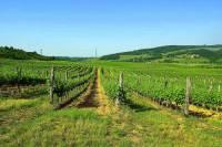 """Vinařská oblast, jejíž vinice jsou na obrázku č.3 je proslulá produkcí vína již od středověku. I proto byla r.2002 zapsána na seznam UNESCO. Ze zdejší vinné révy - nejznámější odrůdou je """"Furmit"""" - se vyrábějí aromatická vína zlatavé barvy. Jmenuje se: (náhled)"""