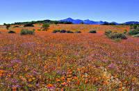 Na obrázku č.10 je jedno z nejbohatších území na výskyt rostlin na světě. Z tohoto důvodu bylo v r.2004 zapsáno na seznam UNESCO. Název území: (náhled)