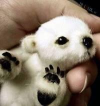 Jen počkej, až vyrostu! To už mě asi na jedné ruce neuneseš! Myslíte, že ze mě bude medvěd lední? (náhled)