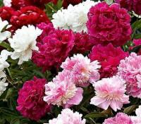 Která květina je na obrázku č.13? (náhled)