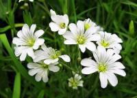 Jak se jmenuje květina na fotografii č.14? (náhled)