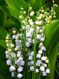 Jaký je botanický název květiny na obrázku č.17? (náhled)