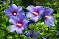 Květina na fotografii č.18 se jmenuje: (náhled)