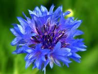 Jak se jmenuje květina na fotografii č.20? (náhled)