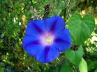 Květina na obrázku č.21 se jmenuje: (náhled)