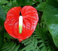 Květina na fotografii č.22 se jmenuje: (náhled)