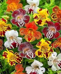 Květina na fotografii č.24 se jmenuje: (náhled)
