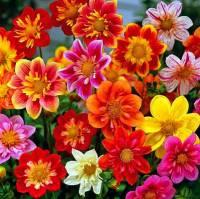 Jaký je botanický název květiny na fotografii č.25? (náhled)