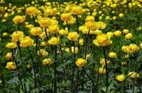 Jaká květina je na fotografii č.4? (náhled)