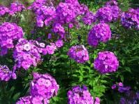 Jak se jmenuje květina na fotografii č.7? (náhled)