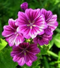 Květina na fotografii č.8 se jmenuje: (náhled)