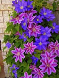 Okrasná rostlina na fotografii č.18 se jmenuje: (náhled)