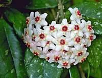 Pokojová květina na obrázku č.3 se jmenuje: (náhled)